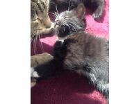 Kittens ready for new homes