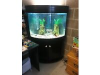 250l aqua one corner fish tank full set up with stand external filter 2 x t5 light pump gravel more