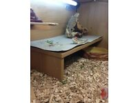 2 baby breaded dragons with the tank and everything for sale paid 370 looking for 275/300