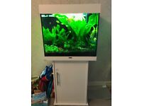 Juwel Lido 120, Fully Planted, CO2 injection and Fish