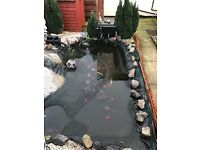 RE HOME YOUR POND FISH HERE