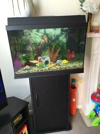 Fish Tank with fish and full set up.