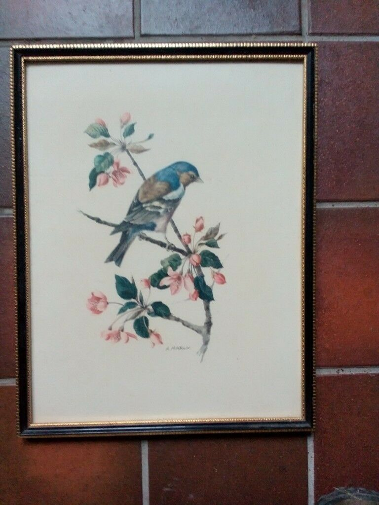 bird print framed by A Marlin | in Cambridge, Cambridgeshire | Gumtree