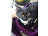 Baby female kitten
