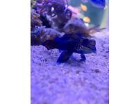 Marine aquarium fish tank stuffs for sale
