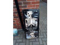 5ft Skeleton