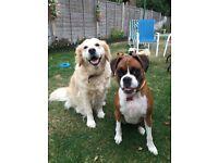 Walking Paws Ipswich - Dog Walking, Boarding and Pet Sitting - Ipswich and surrounding areas