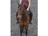 16.2 Horse forLoan