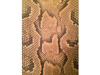 Python snake skins