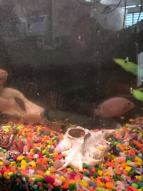 Tropical fish for sale . Convicts , small fish £2 each . Larger convicts £4 each .