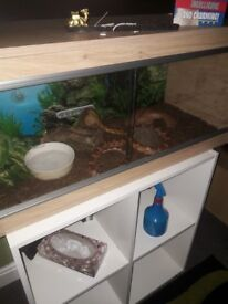 Corn Snake and wooden aqarium . 2 years old. 4ft. Comes wjth everything needed.