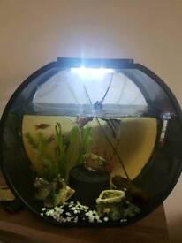 Fish Tank - Must Go