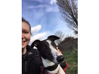 Local dog walking for busy pet owners in Little Baddow/Danbury area