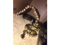 2 snakes