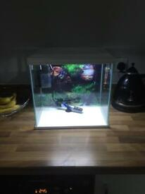 27 litre fish tank set up
