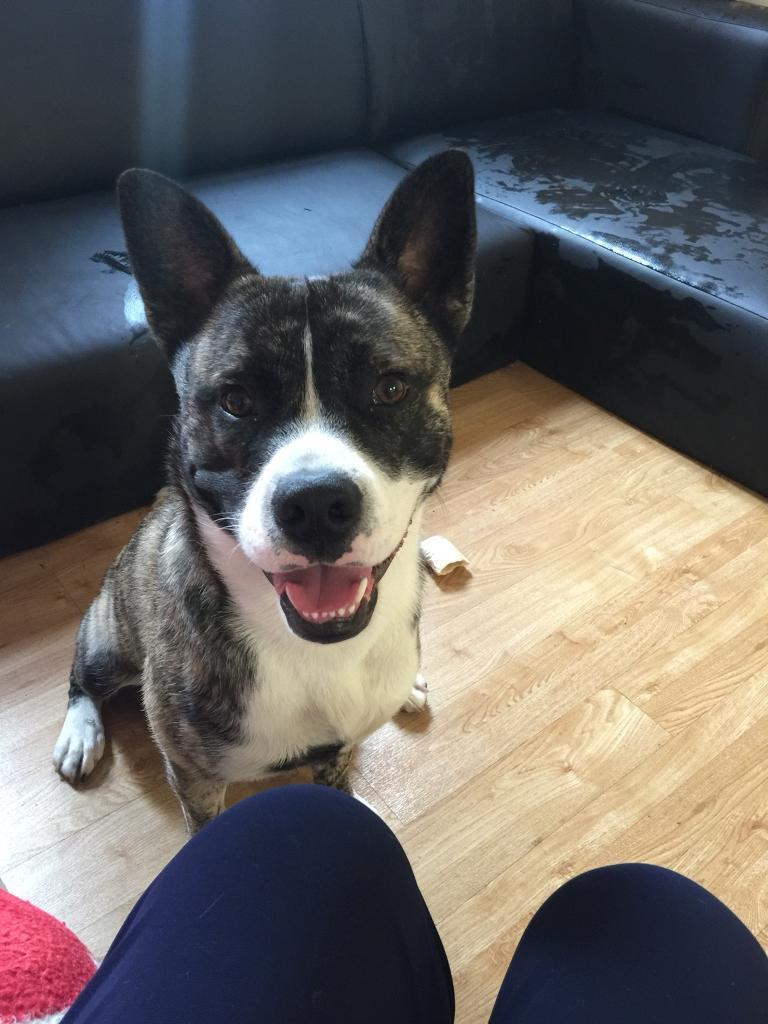 Good home wanted for a special young dog