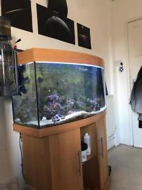 Juwel vision 180 3 foot (Marine/Freshwater)