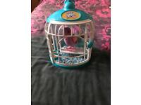 Little live pet bird and cage