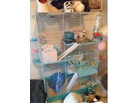 Hamster with cage and equipment