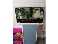 well established tank stand, fish and all equitment