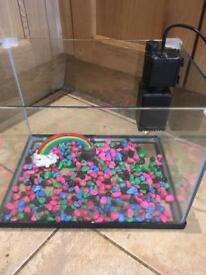 First fish tank/aquarium