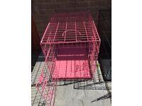 Pink dog create