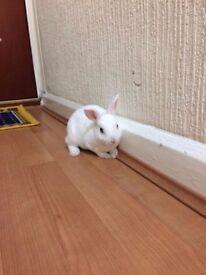 Dwarf beautiful baby rabbit