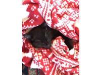 10 weeks old kitten (+belongings) needs rehoming
