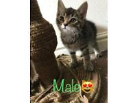 Kittens 😺 read description💕