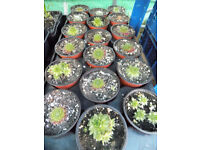Different types of Baby Succulents