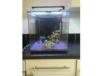 Aqua One Aspire 55L fish tank with extras