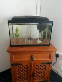 Fish tank and 2 gold fish