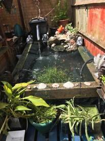 Large fish pond with all filters and return pumps, UV lamp.....200fish