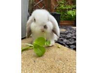 Two beautiful rabbits