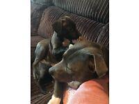 1 puppy left