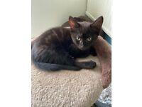One beautiful girl kitten left