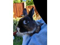 Cute show rabbits for sale.