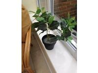 Artificial house plant