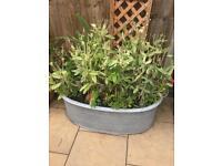 Antique galvanished planted garden tub £50