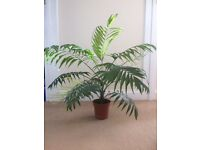 indoor plant parlor palm