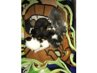 Lovely kittens will soon be ready for new home