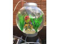 Baby biorb fish tank