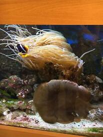 Marine fish coral - -anemome & mushroom