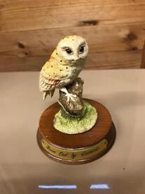 Barn owl on wood