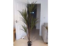 dracaena marginata artificial plant 180 cm