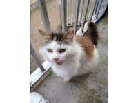 Looking to rehome a cat