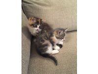 2 x Beautiful kittens