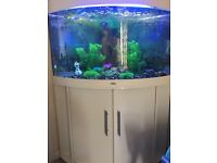 190l tank with fish