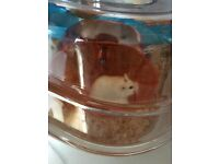 Hamster and cage x 2