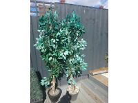 2x 6ft tall artificial trees